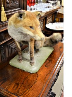 Mounted taxidermy fox